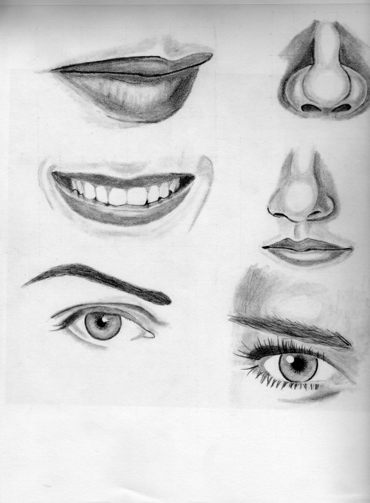 Best Nose Pencil Sketch Tutorial Nose Pencil Sketch At Paintingvalley | Explore Collection Of Image