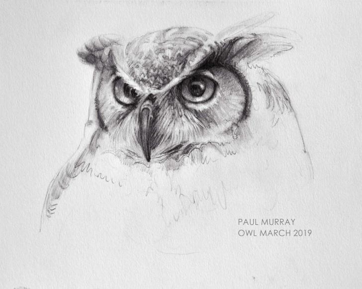 Best Owl Pencil Sketch Free Owl Pencil Sketch Original @875 - Art Of Paul Murrayart Of Paul Murray Image