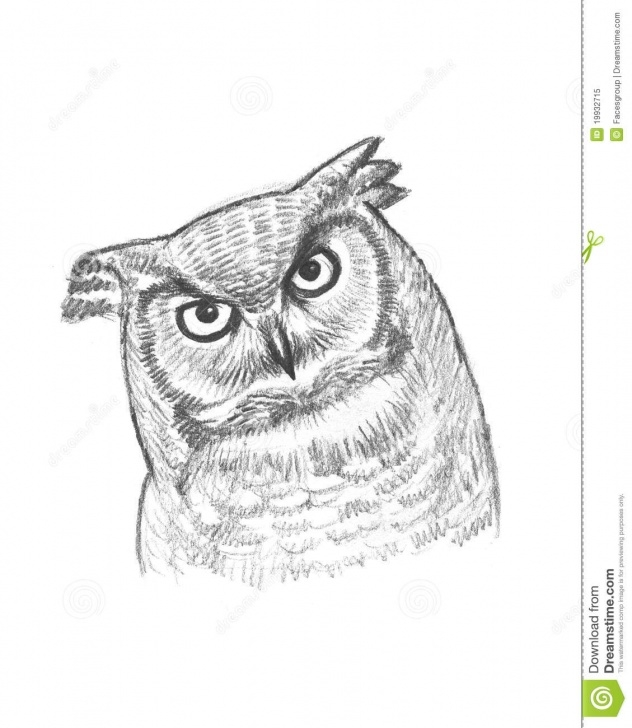 Best Owl Pencil Sketch Ideas A Pencil Sketch Of An Owl Stock Illustration. Illustration Of Images