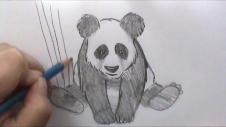 Best Panda Drawing Realistic Techniques How To Draw A Panda Pictures