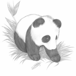 Best Panda Pencil Sketch Techniques for Beginners Pin By Kylisha Williams On Animal Pencil Drawings | Panda Drawing Pics