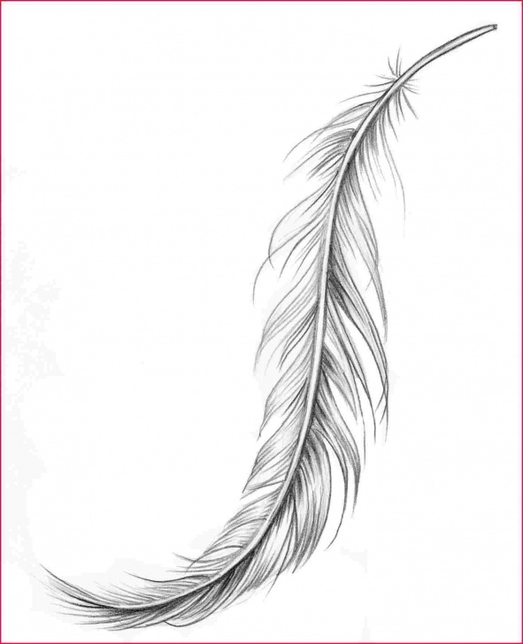 Best Peacock Feather Pencil Sketch Ideas Likhita Japa Journalrhjqgaineswordpresscom Peacock Peacock Feather Picture