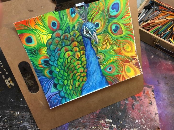 Best Peacock Pencil Drawing With Color Techniques Peacock Colored Pencil Drawing : Peacocks Pics