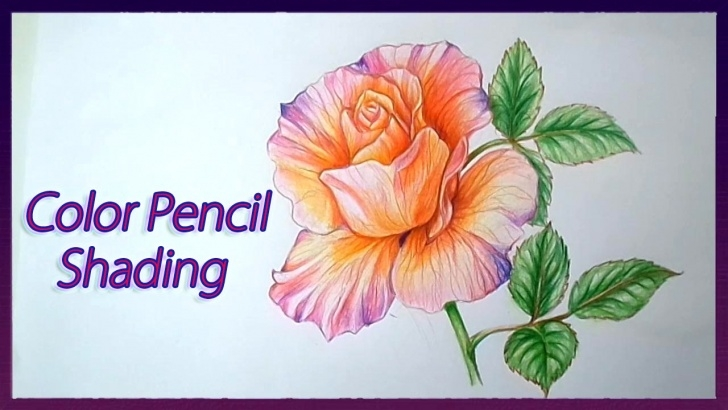 Best Pencil Colour Shading Drawing Simple Realistic Color Pencil Shading Tutorial Of Rose Flowers Drawing Tutorial Pic