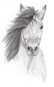 Best Pencil Drawings Of Animals Tutorial Pencil Sketches Of Animals | Horse Pencil Sketch By Vulpes Corsac Photos
