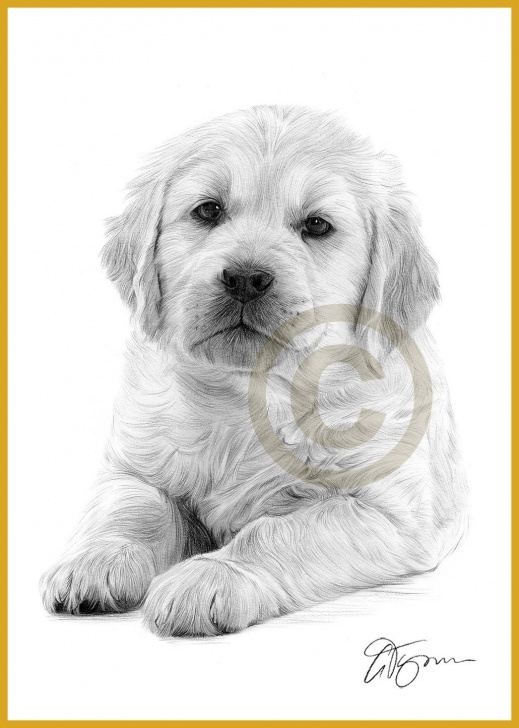 Best Pencil Drawings Of Puppies Free Pencil Drawings Of Puppies And Pencil Sketches Of Puppies Inspiring Pic
