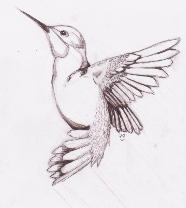 Best Pencil Sketches Of Birds Free Pencil Drawing Pictures Of Birds At Paintingvalley | Explore Photos