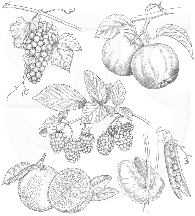 Best Pencil Sketches Of Fruits And Vegetables Step by Step Drawing Pictures Of Fruits And Vegetables At Paintingvalley Pics