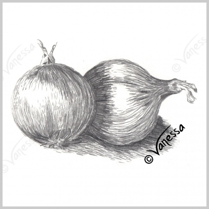 Best Pencil Sketches Of Fruits And Vegetables Tutorial Onions Still Life Study Pencil Drawing Art Original Artwork Realism Picture