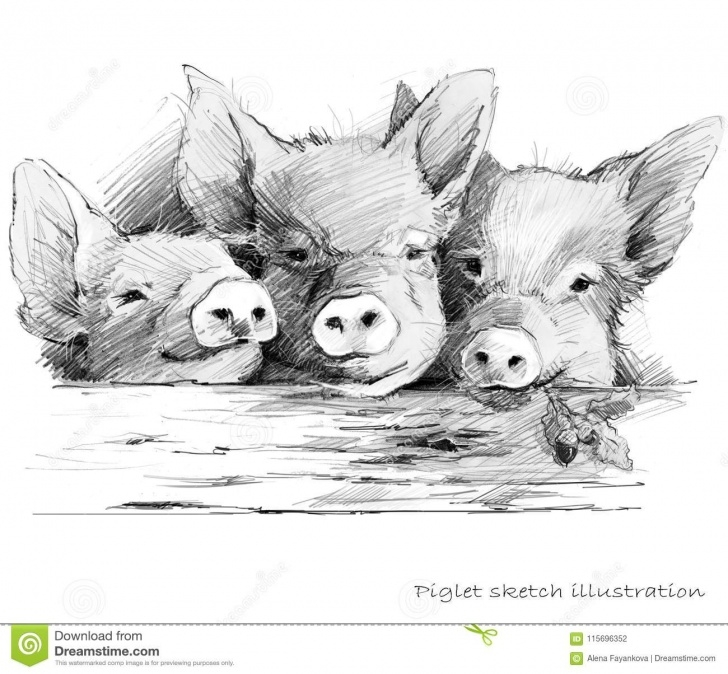 Best Pig Pencil Drawing for Beginners Cute Piglet. Pig Pencil Sketch Illustration Stock Illustration Photos