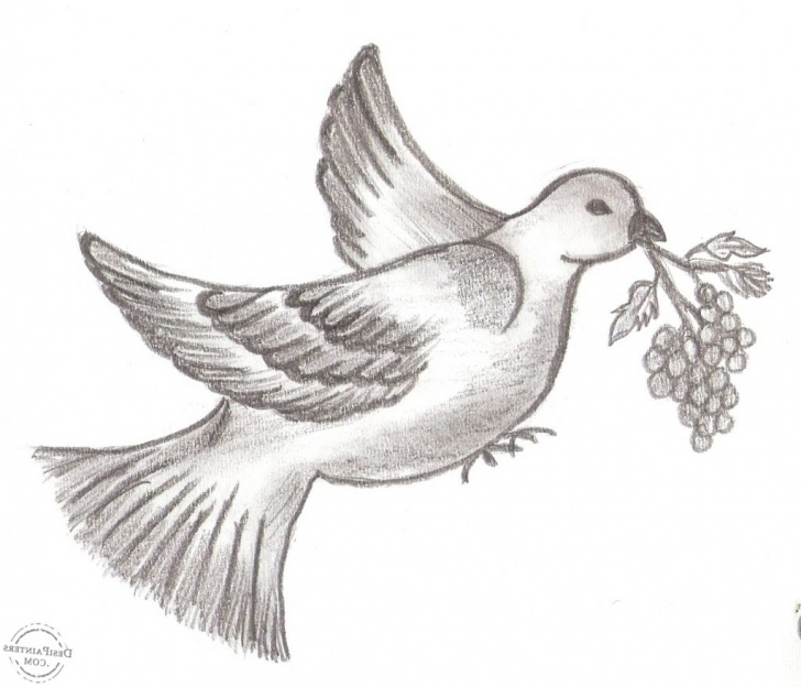 Best Pigeon Pencil Drawing Ideas Pigeon Pencil Drawing At Paintingvalley | Explore Collection Of Pictures