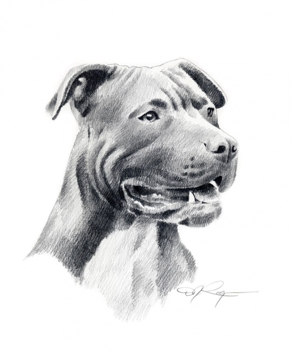 Best Pitbull Drawings In Pencil Courses Dog Drawing Pitbull | Art | Dog Art, Pitbull Terrier, Pitbull Drawing Photos