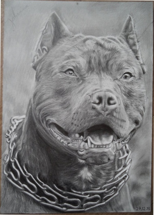 Best Pitbull Drawings In Pencil Free Pitbull Drawing, Pencil, Sketch, Colorful, Realistic Art Images Image