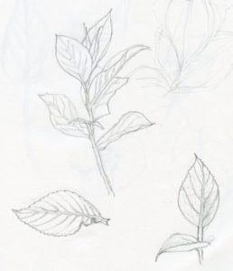 Best Plant Pencil Drawing Techniques for Beginners Plant Pencil Line Drawing - Google Search | How To Draw Realistic Photos