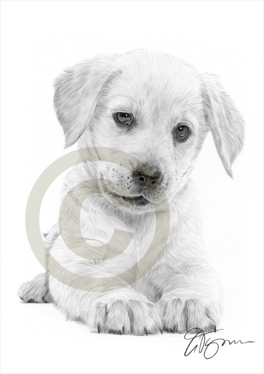 Best Puppy Pencil Drawing Courses Pencil Sketch Of Puppy And Dog Labrador Retriever Puppy Pencil Photo