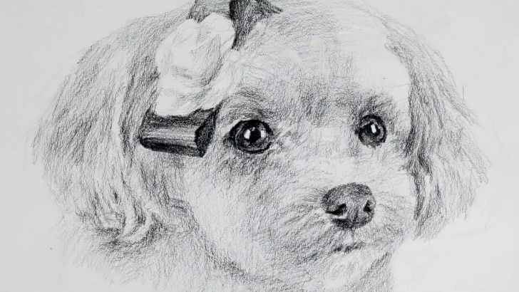 Best Puppy Pencil Drawing Techniques How To Draw A Cute Puppy With Only One Pencil /drawing Y Pics