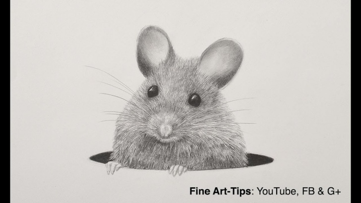 Best Rat Pencil Drawing Courses How To Draw A Mouse With A Mechanical Pencil - Animal Hair - Rat Fur Pics