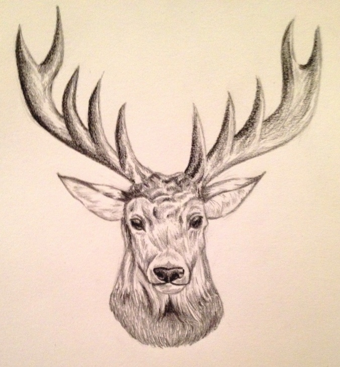 Reindeer Pencil Drawing