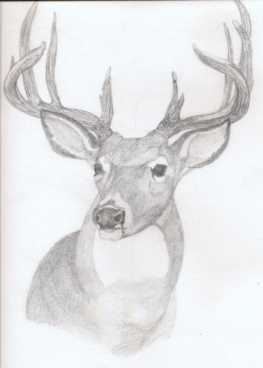 Best Reindeer Pencil Drawing Tutorial Deer Drawings In Pencil | Art: Deer Rough Sketch In Pencil Images