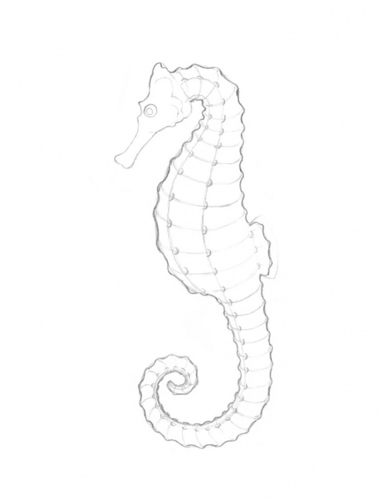 Best Seahorse Pencil Drawing Ideas How To Draw A Seahorse With Black And Grey Ink Liners Photos