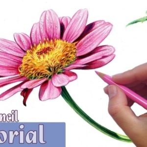 Best Shading Flowers With Colored Pencil Courses How To Draw And Shade A Flower In Colored Pencil Picture