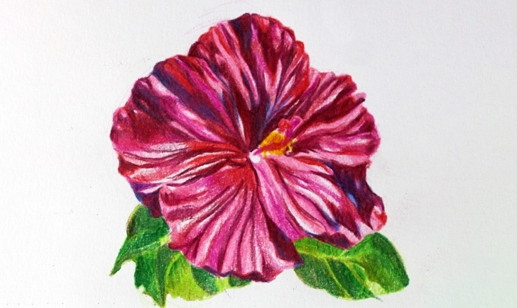 Best Shading Flowers With Colored Pencil Simple Drawing Flowers In Colored Pencil: A Simple Tutorial Picture