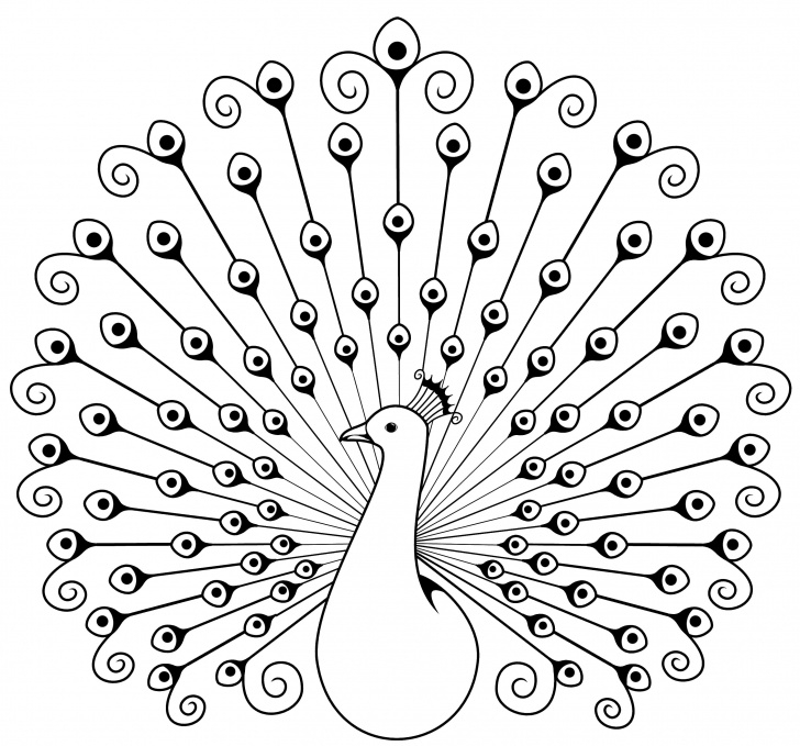Best Simple Pencil Sketch Of Peacock Tutorials A Swirly Peacock | Butterfly | Peacock Drawing, Peacock Coloring Picture