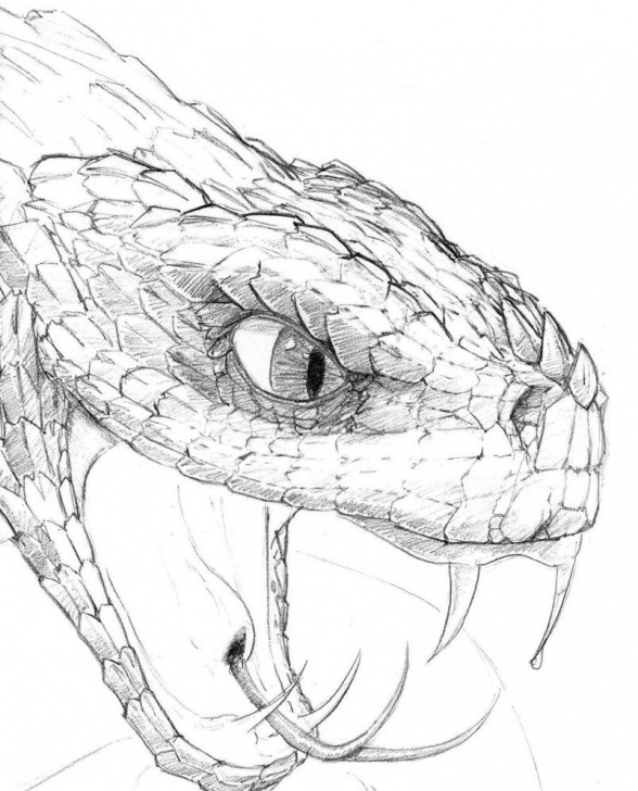 Best Snake Pencil Sketch for Beginners Snake Head Drawing - Google Search … | Crafts | Snake… Image
