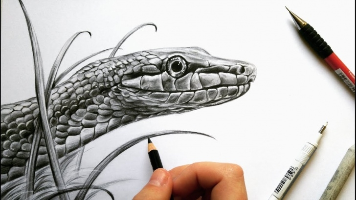 Best Snake Pencil Sketch Free Drawing A Realistic Snake In Graphite! | Leontine Van Vliet Pic