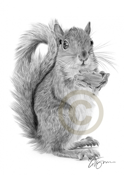 Best Squirrel Pencil Sketch Easy Squirrel Pencil Sketch At Paintingvalley | Explore Collection Of Photo