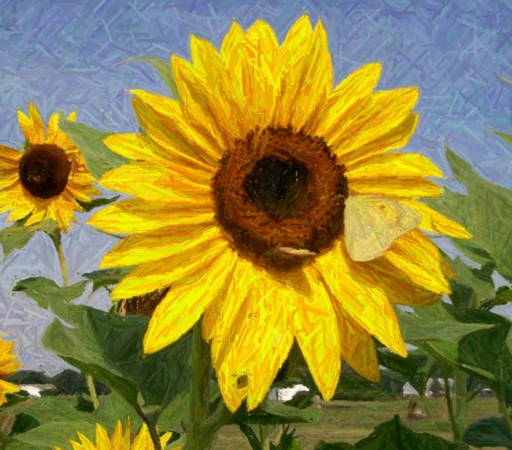 Best Sunflower Colored Pencil Ideas Colored Pencil Sunflower | Rlhendrixson | Flickr Photos