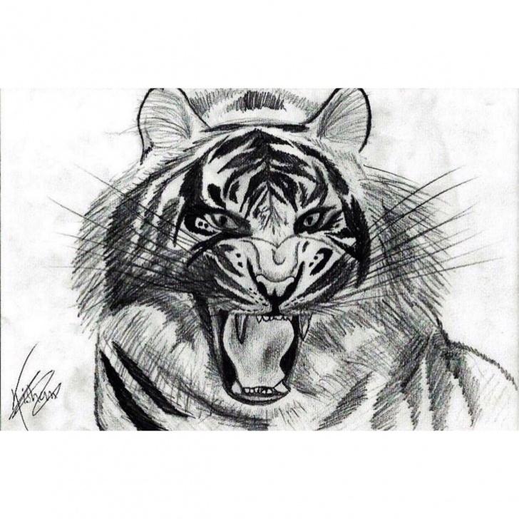 Best Tiger Pencil Drawing Tutorial Tiger // Pencil Drawing // 28.8 X 19.3 Cm // Print Only - Depop Pics