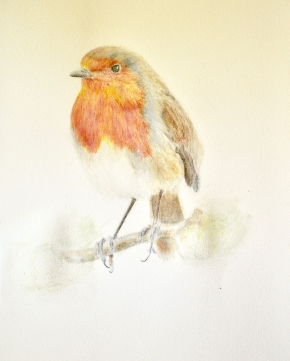 Best Watercolor And Colored Pencil Illustration Step by Step Robin By Paintings By Lak | Watercolor, Colored Pencil, And Acrylic Pictures