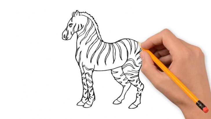 Best Zebra Pencil Drawing Lessons Zebra Animals Pencil To Draw Step By Step Photo