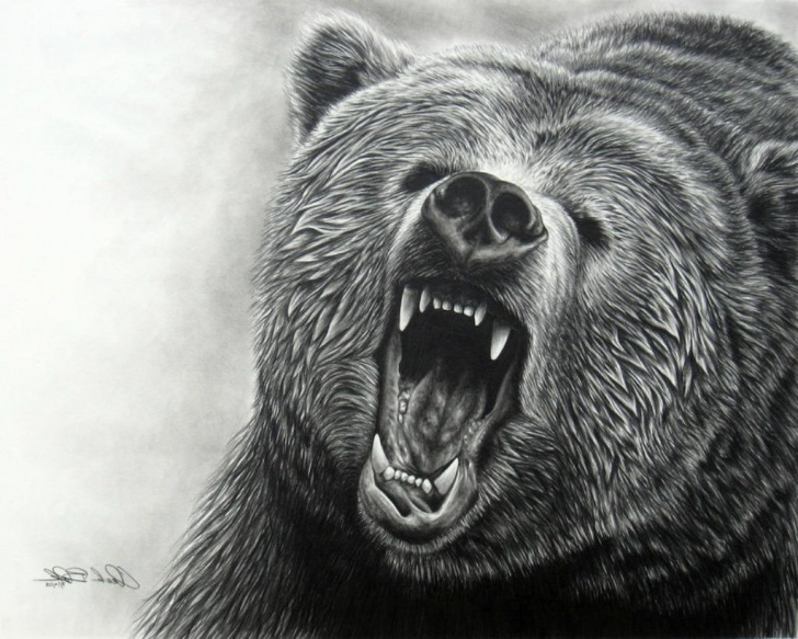 Excellent Bear Pencil Drawing Techniques for Beginners Grizzly Bear Pencil Drawing At Paintingvalley | Explore Pics