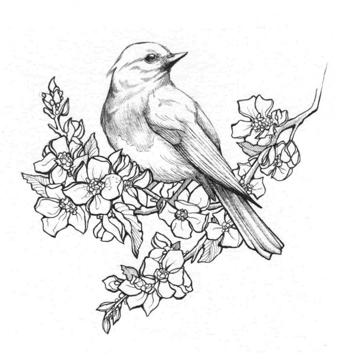 Excellent Bird Drawing Pencil Techniques Drawing Pencil Flower And Bird | Drawing Work Images