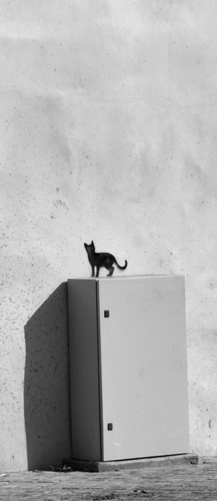 Excellent Cat Graffiti Stencil Lessons Cat Stencil ☆ @romeotees #nicosia #cyprus | Street Art | Street Art Photos