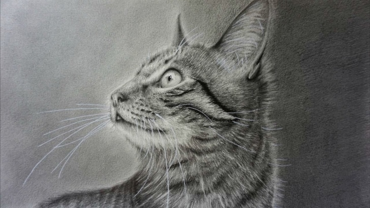 Excellent Cat Pencil Drawing Courses How To Draw A Realistic Cat With Pencil Step By Step Photos