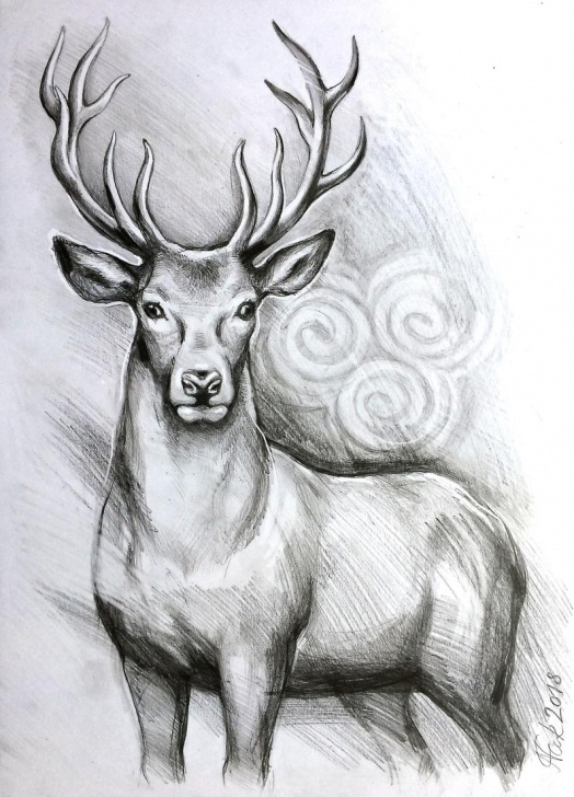 Excellent Deer Pencil Drawings Techniques for Beginners Deer Pencil Drawings At Paintingvalley | Explore Collection Of Picture