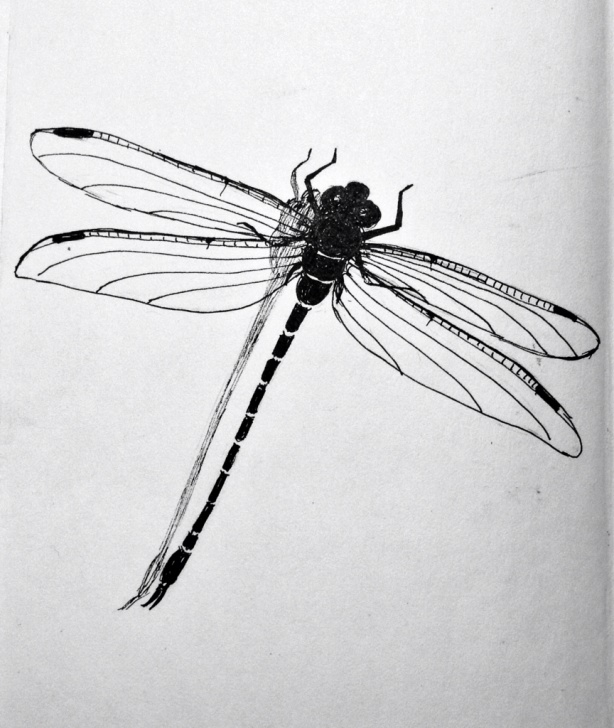 Excellent Dragonfly Pencil Drawing Lessons Dragonfly Pencil Sketch At Paintingvalley | Explore Collection Pic