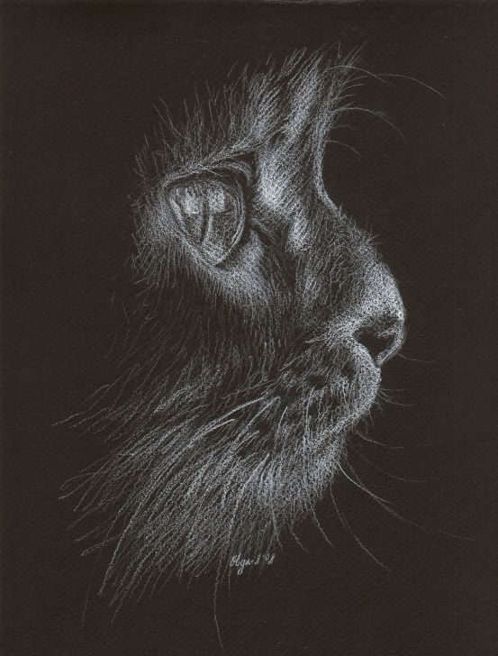 Excellent Drawing With White Pencil On Black Paper Courses White Pencil On Black Paper Draw - Hledat Googlem | Animals Images