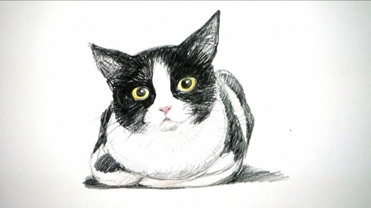 Excellent Easy Cat Pencil Drawings Tutorial Colored Pencil Cat Drawing | How To Draw A Cat | Easy Drawing Tutorial |  Time Lapse Video| Drawpedia Photo