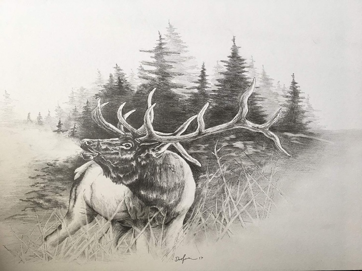 Excellent Elk Pencil Drawings Techniques Elk Pencil Drawings At Paintingvalley | Explore Collection Of Images