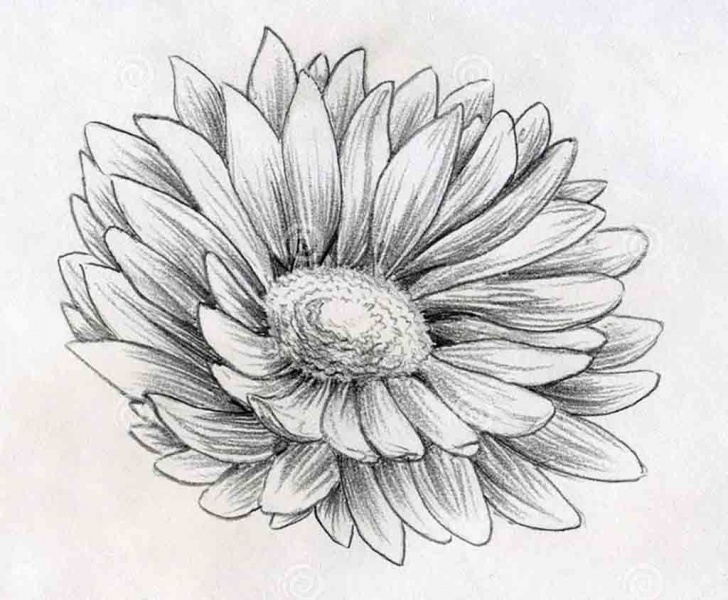 Excellent Flower Drawing With Pencil Simple Pencil Sketch Images Flowers At Paintingvalley | Explore Images