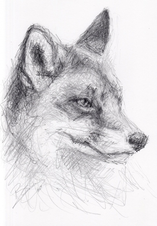 Excellent Fox Pencil Drawing Simple Original A4 Pencil Drawing Of A Fox By Animal Artist Belinda Elliott Pic