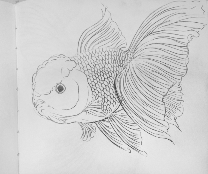 Excellent Goldfish Pencil Drawing Techniques for Beginners Goldfish | Goldfish In 2019 | Fish Drawings, Fish Art, Goldfish Tattoo Images