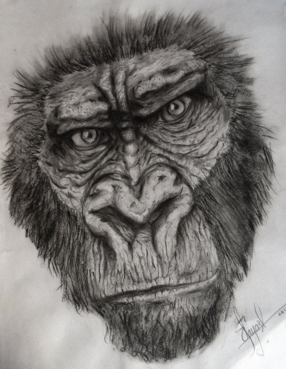 Excellent Gorilla Pencil Drawing for Beginners Gorilla Sketch Drawing Gorilla Sketch By Dr Carrot | Wild Life Pic