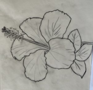 Excellent Hibiscus Flower Pencil Drawing Ideas 12 Fancy Hibiscus Flower Pencil Drawing Gallery - Flower Drawing Pics