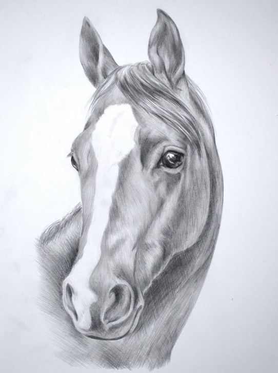 Excellent Horse Pencil Drawing Simple Horse Head Pencil Sketch And Pencil Sketches Of Horses Pencil Picture