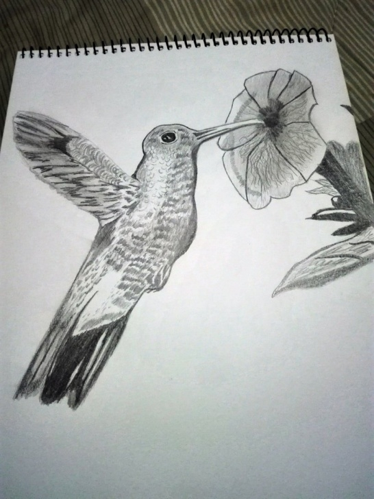 Excellent Hummingbird Drawings In Pencil Simple Hummingbird Drawing Pencil By Bymilo13 On Deviantart Image